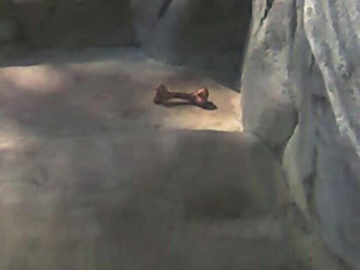 The last guy who fell in the bear pit.