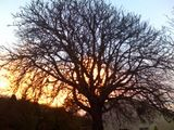 Sunset behind the tree, Penally, Wales