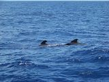 Whale and Dolphin Trip, Tenerife today