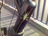 Grasshopper leaps on to moving bicycle!