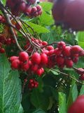 Mellow fruitfulness