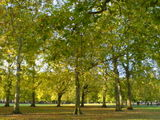 Green Park - walking to work