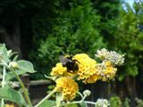 Busy as a bee :-)