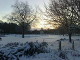 Winter in Wollaton Park