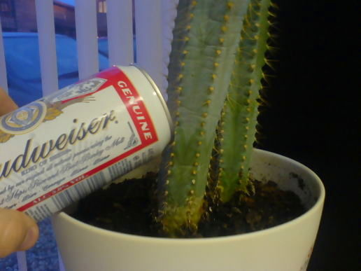 Secret to the cactus growing spurt..