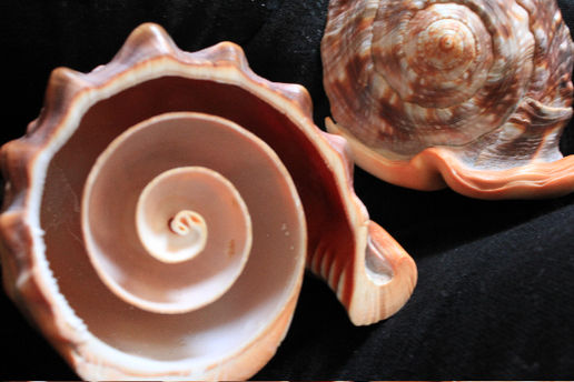 What the inside of a shell looks like