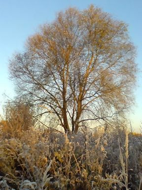 the first hoar-frost