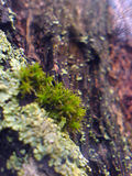 moss, linden, larch and the magnifying glass