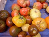 Tomatoes in different hues