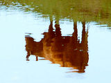 Cow, Reflected