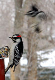 More Woodpecker