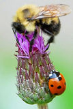 Two on a Thistle