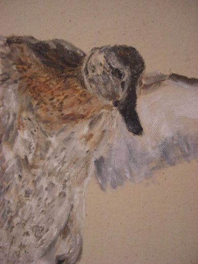 wild duck - acrylic on canvas by Caio Fernandes 2009