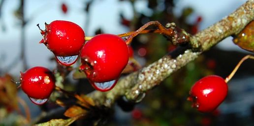 berry droplets