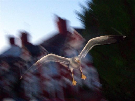 Attack of the ghostly seagull