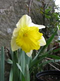 First of March...   St David's Day