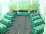 Inside the polytunnel. Tomorrow is potti