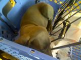 Apparently, Gracie can sleep in a shopping cart, too.
