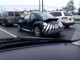 German Zebra!