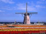 Netherlands: windmills, tulips &  wooden shoes