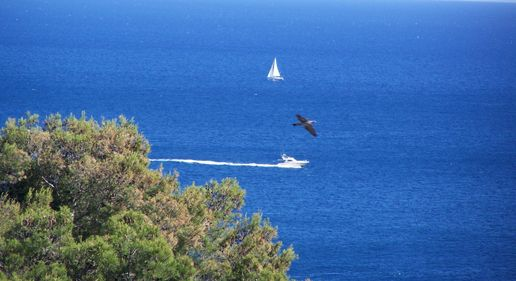 A yacht, a boat and a bird...