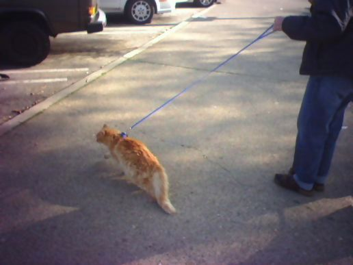 cat-on-a-leash-yup.jpg