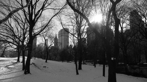 Central park (at zero degrees)