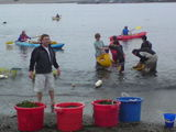 Eelgrass transplanting with Savethebay