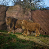 Trip to Colchester zoo - pt 1