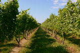 Trip to Sakonet vineyard