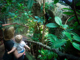 Universeum - Tropical world
