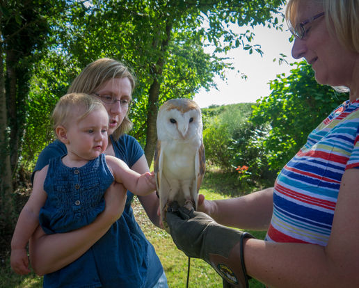 When Freyja met Blizzard the Barn Owl