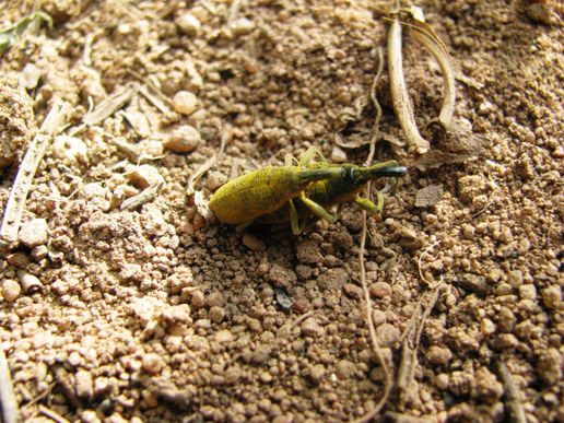 ants and grasshoppers relationship