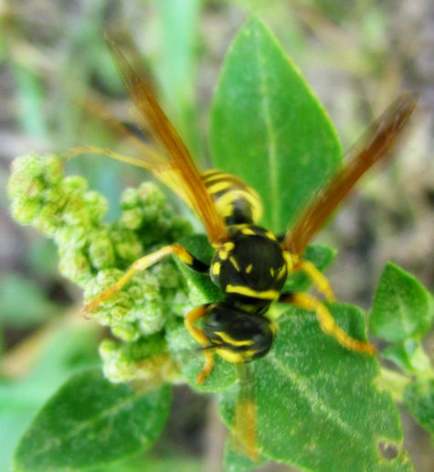 Wasp Rescue