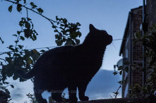 Beautiful Misha #Cat #Silhouette #Dusk #GoldenHour #Photo