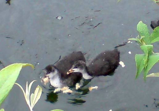 canal babies