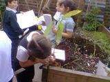 Scientific enquiry in the school grounds.