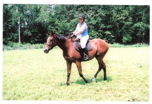 17h thoroughbred mare