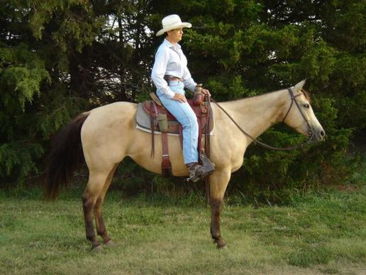buckskin big and beautiful singles Gaited horse for sale on thehorsebaycom sq ranch: cash1, quiet, well broke, 10 yr old buckskin quarter horse gelding for sale - duration: 9:42 neil spoden 23,487 views.