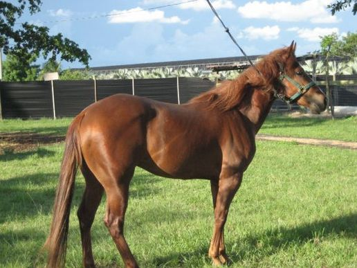 Q Horses For Sale Quarter Horse for sale...