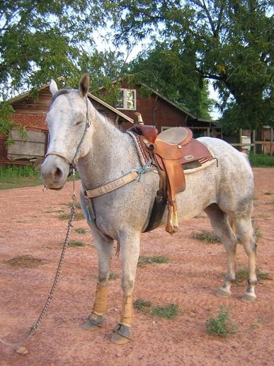 Q Horses For Sale Quarter Horses for Sal...