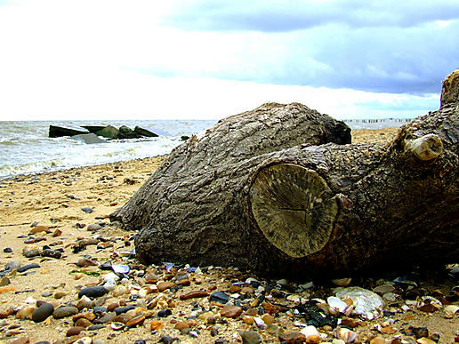 HESFES: Driftwood and Decay