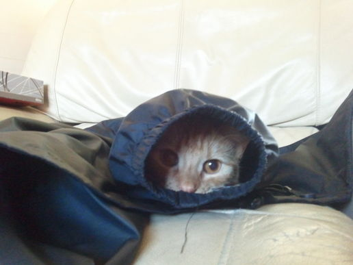 I'm in your coat sleeve....