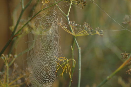 Another view of cobwebs in the fog