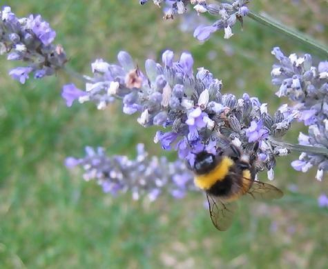 Busy, buzzy bees