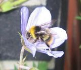 Bee-blogging!