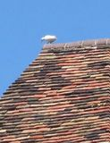 Dove and tiles