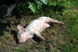 Let sleeping pigs lie