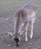 More deer from Clissold Park
