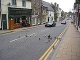 The ducks cross the road